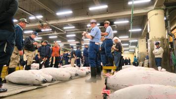 Der Besuch der Thunfisch-Auktion: Japan-Geheimtipps #7